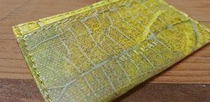Bild soll zeigen was Blattleder ist und wie die Blattstruktur genau aussieht